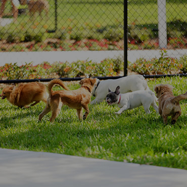 Large Dog Park at Radford Apartments